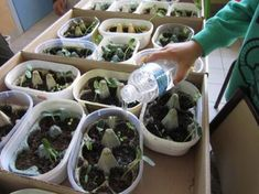 Mon mini potager - Science and Nature Cool Science Experiments, Science For Kids, Science And Nature, Land Art, Permaculture, Diy Jardim, Seed Planter, Classroom Door, Science Classroom