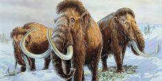 Estudo sobre extinção de mamutes põe em evidências riscos climáticos atuais.
