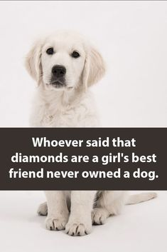 Most popular american dog breeds Animals And Pets, Baby Animals, Funny Animals, Cute Animals, Wild Animals, Dog Quotes, Animal Quotes, Animal Memes, Cute Puppies