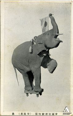 Indian elephant hail to Japan! ...weird postcard indeed