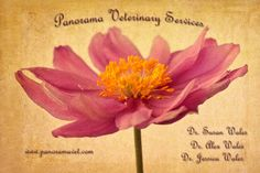 Panorama designs for web