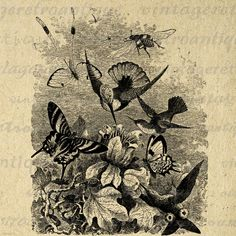 Hummingbird Birds Graphic Digital Download Birds with Flowers and Butterfly Image Printable Vintage Clip Art. High resolution printable graphic from antique artwork for printing, iron on transfers, tea towels, t-shirts, and many other uses. Great for use on etsy items. This digital image is large and high quality, size 8½ x 11 inches. Transparent background version included with every graphic.