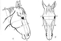 how to draw horse head Horse Head Drawing, Horse Drawings, Animal Drawings, Art Drawings, Animal Sketches, Art Sketches, Horse Drawing Tutorial, Horse Anatomy, Animal Anatomy