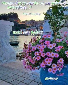 Good Afternoon, Good Morning, Beautiful Pink Roses, Greek Quotes, Good Night, Funny Quotes, Plants, Poster, Window