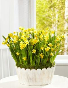 Buy the Narcissi Glass Trough from Marks and Spencer's range. Herbs, Spring, Glass, Flowers, Easter, Food, Yellow, Drinkware, Corning Glass