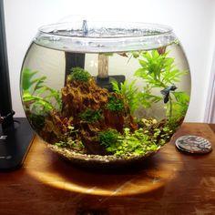 drag to resize or shift-drag to move Aquarium Betta, Aquarium Garden, Mini Aquarium, Betta Fish Tank, Planted Aquarium, Aquascaping, Water Terrarium, Terrariums, Indoor Water Garden