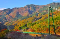 「もみじ谷大吊橋」は、栃木県那須塩原にある塩原ダム湖にかかる吊り橋。全長は320メートルで、歩行者専用つり橋の中では本州でも5本の指にはいるほどの長さです。周囲はダム湖を囲む渓谷となっていて夏は深い緑、そして秋は素晴らしい紅葉を望めます。