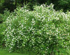 Olympus Digital Camera, Garden Plants, Herbs, Backyard, Exterior, Image, Cottage, Patio, Herb