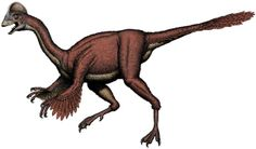 "Anzu wyliei - ""Chicken from hell"" dinosaur makes formal scientific debut - Pictures - CBS News"