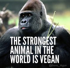Make the Connection. Stop being WEAK and allow yourself to learn about a plant based diet. It's better for you, it's better for them and it's better for Earth. Go Vegan Friends Not Food