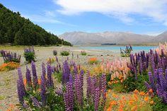 Neuseeland – Vielfalt der Südinsel, Kalenderblatt August: Lake Tekapo