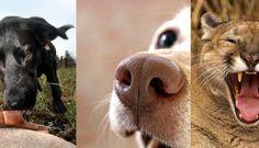 Inzet van geurdetectie honden bij natuurbehoud/ Using trained detection dogs to find environmental contaminants