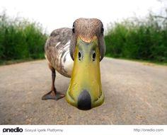 Her ördek gagası tıpkı sonradan takılmış bir köpek maskesi görünümündedir.
