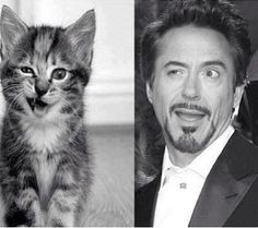 Robert Downy Jr. and a cat. your argument is invalid.
