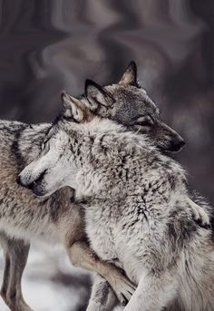 Loup 🐺🐺🐺, See the Best animal pictures from AnyCanal , These are the b. Wolf Photos, Wolf Pictures, Animal Pictures, Animals And Pets, Funny Animals, Cute Animals, Wild Animals, Baby Animals, Wolf Spirit