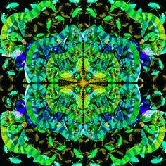 I am a Chameleon Chameleon, City Photo, Symbols, My Love, Animals, Art, Art Background, Animales, Animaux