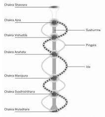 Bildergebnis für doppel helix kundalini