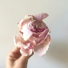 #peonia #flores #flowers #decor #texturas #art #color #inspiration #inspiracion #luz #TuDecoracionOriginal