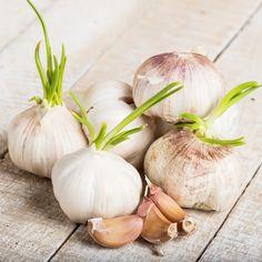 """Tento recept sa niekedy nazýva aj """"cesnakové mlieko"""". Ingrediencie: 250 ml mlieka 5 strúčikov cesnaku 2 čajové lyžičky cukru alebo medu 100 ml vody Príprava a užívanie 1. Vezmite hrniec analejte do neho mlieko avodu. 2. Potom pridajte očistený apopučený cesnak. Následne hrniec položte na Onion, Garlic, Vegetables, Food, Lemon, Onions, Essen, Vegetable Recipes, Meals"""