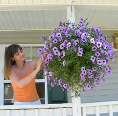 hanging basket idea, tip, and guide http://myhangingbaskets.com/