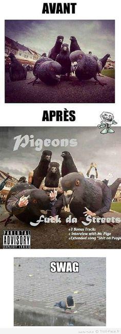 Ces pigeons ont choisi la thug life.. !