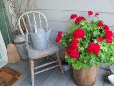 Red geraniums, weathered chair, watering can
