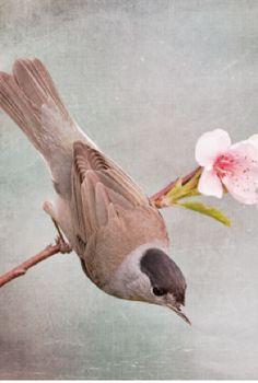 spring inspiration from design seeds #HarpersBAZAAR #SpringStyle