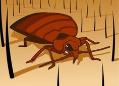 Senior travel tips: How to identify bed bugs and keep yourself safe.