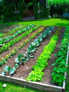Vegetable Garden Row Spacing... backyard garden in the making.