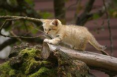 Exploring the wild