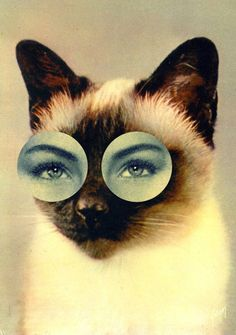 CAT eyes and Ma + Chr, a design studio created by Mathilde Aubier and Christine Delaquaize.