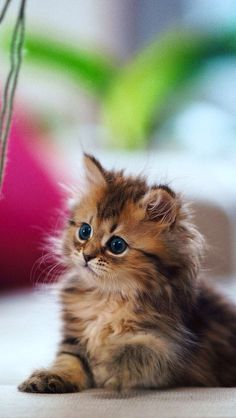 Cutest kitty ever!!
