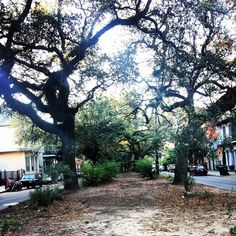 Path of trees #beautiful #neworleans #nature #frenchquarter #tree #path by sbrownlee02