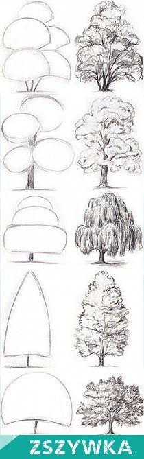 Zobacz zdjęcie drzewa w pełnej rozdzielczości