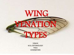 WING TYPES AND VENATION SSNAIK