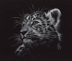 drawing on black paper with white pencil