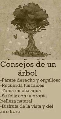 Consejos de un árbol | Frases y citas celebres