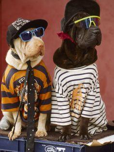 Gangsta Dawgs... Bench loves stripes
