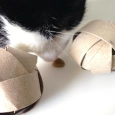 Dispensador de premios para gatos  http://www.lalocadelosgatos.com/haz-un-dispensador-de-premios-para-gato-con-un-rollo-de-papel-higienico/#at_pco=smlwn-1.0&at_si=53902aad9711ed95&at_ab=per-14&at_pos=0&at_tot=1