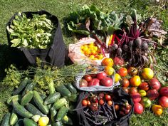 Planning your vegetable garden now will ensure a bountiful harvest in the months ahead.
