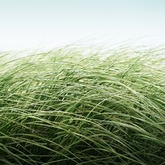love the idea of grass photographed close, then the photo blown up huge for a wall.