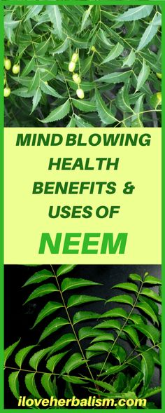 MIND BLOWING HEALTH BENEFITS& USES OF neem