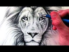 Dit is het filmpje dat ik gebruik om mijn leeuw te tekenen. Ik heb dit filmpje gekozen omdat ik een grote mooie leeuwenkop wil maken.
