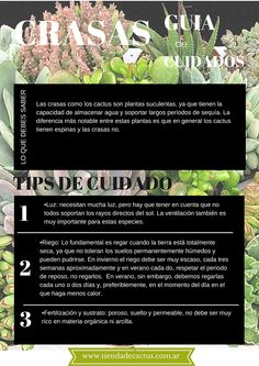 Tienda de Cactus www.tiendadecactus.com.ar