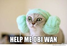 Princess Leia Cat. OH MY GOSH! It may be funnier because it's so late, but I'm laughing so hard ;)