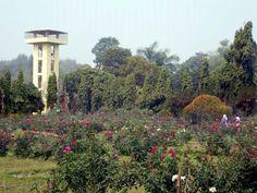 The National Botanical Gardens are next to the zoo at Mirpur in Dhaka, Bangladesh. Gypsum Decoration, Gypsum Wall, National Botanical Gardens, Luxembourg Gardens, Ceiling Rose, Seattle Skyline, Dhaka Bangladesh, Travel, Beautiful