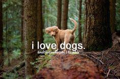 ♥ cães
