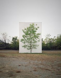 Myoung Ho Lee photographs solitary trees, separated against the natural environment with a simple white canvas. Exploring ideas on nature, art, reality and how we perceive the world.