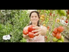 La Vieille Ferme est un P'tit Marché Fermier, engagée dans la production d'aliments naturels, le développement durable, la découverte et l'accueil pédagogique. Fjord, The Creator, Old Farmhouses, Natural Foods, Love Story, Sustainable Development