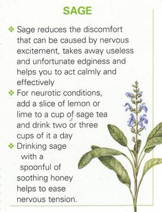 Sage for stress, tension & sore throats